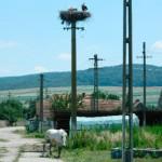 Peste 1000 de locuitori din Micoşlaca şi Cisteiu de Mureş au rămas fără apă