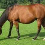 Tânăr din județul Sibiu cercetat de polițiștii din Fărău ca fiind persoana bănuită de furtul unui cal în valoare de 7.000 de lei