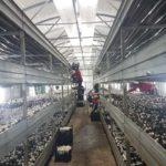 La Găbud, satul în care nu se întâmplă nimic, a prins contur o afacere profitabilă cu ciuperci