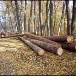 Defrişarea dealului Banţa pune în pericol oraşul Ocna Mureş