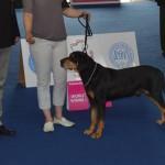 FOTO: 8 Copoi Ardelenești din Transilvania s-au făcut remarcați la World Dog Show 2013 – Ungaria