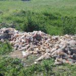 """Sute de kilograme de cornuri din programul """"cornul și laptele"""" au fost aruncate pe malul râului Mureș, în zona orașului Ocna Mureș"""