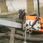 Bărbați din Fărău cercetați de polițiștii din Ocna Mureș după ce au tăiat fără drept 29 de arbori