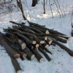 Bărbat de 42 de ani din Jidvei surprins în timp ce tăia copaci nemarcați din pădurea limitrofă Comunei Noșlac