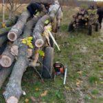 Patru bărbați din Noșlac cercetați de polițiști pentru tăiere ilegală și furt de arbori