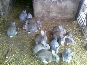 iepuri-ocna-mures