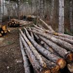 """Deşi ancheta demarată de prefect a zis că e în regulă, ocnamureşenii sunt tot nemulţumiţi de exploatarea forestieră de pe Dealul """"Banţa"""""""