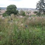 După 4 ani de litigii, Primăria Ocna Mureş poate transforma cimitirul oraşului într-un loc civilizat al odihnei de veci