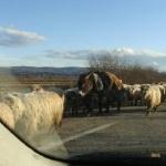 Un cioban a fost accidentat și mai multe oi omorâte în urma unui accident produs în zona Ocna Mureș-Noșlac