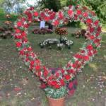 Astăzi, 29 iunie 2013, Ziua Rozelor, ediţia a XII-a, la Ciumbrud